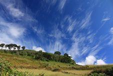 Grass Field Under Beautifull Sky Stock Images