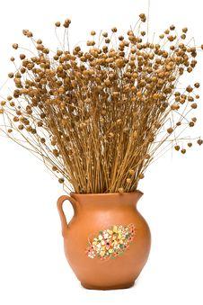 Free Flax (Linum Usitatissimum) Stock Photography - 16208452