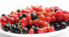 Free Fresh Red And Black Currant On Plate Royalty Free Stock Image - 16209176