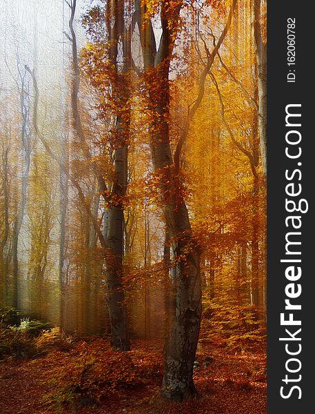 Colorful Autumn Landscape Scene in Vintage Tones.Orange Nature Background.Creative Artistic Wallpaper.Art Photography.Leaves,fall.