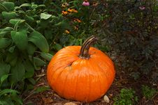 Free Pumpkin Royalty Free Stock Photo - 16210865