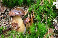 Free Boletus Mushroom Royalty Free Stock Images - 16211439