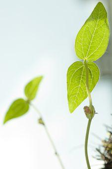 Free Leaf Stock Photo - 16212330