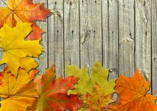 Free Autumn Leaf Royalty Free Stock Images - 16214589