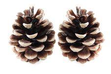 Cones Isolated Stock Photos