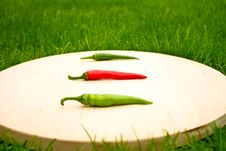 Free Chillies Stock Photography - 16216562