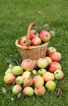 Free Apples Stock Photo - 16218930