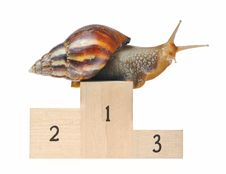 Free Big Snail On Podium Royalty Free Stock Image - 16219366