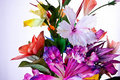 Free Artificial Flowers Stock Photo - 16227470
