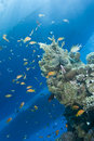 Free Underwater View Of Boat Sihouettes, Coral Reef. Royalty Free Stock Photos - 16229288