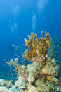 Free A Colorful And Vibrant Tropical Coral Reef Scene. Royalty Free Stock Photos - 16229368