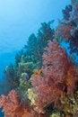 Free Vibrant Orange Broccoli Soft Coral. Stock Photo - 16229610