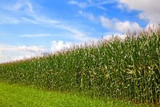 Free Cornfield Stock Photos - 16220133