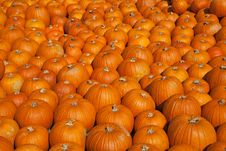 Free Colorful Pumpkins Stock Photography - 16220442