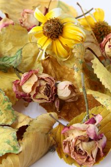 Free Autumn Leaves And Flowers Stock Image - 16221291
