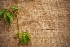 Free Blank Grungy Canvas Background Stock Photos - 16222013