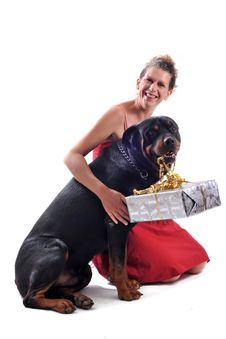 Free Rottweiler, Gift And Woman Stock Images - 16222214