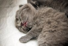 Free Sleeping Newborn Kitten Stock Images - 16222694