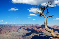 Free Grand Canyon And Tree Royalty Free Stock Photos - 16224498