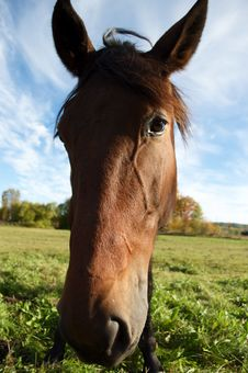 Free Horse Stock Images - 16224584
