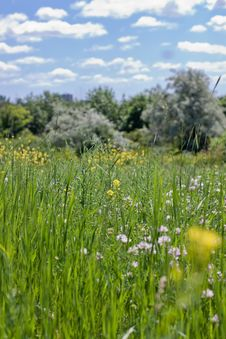 Free Meadow Stock Image - 16226001