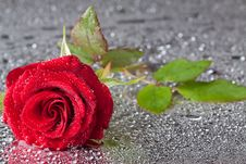 Free Red Rose Stock Photography - 16226112