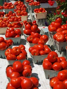 Free Tomatoes Stock Images - 16226254