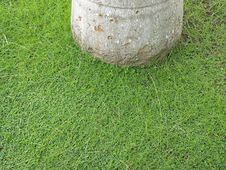 Free Green Carpet Of Clover Around Trunk Stock Photo - 16227270