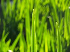 Free Blade Of Grass Against The Sun Stock Images - 16227524