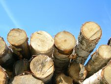 Birch Logs Against The Sky. Stock Image