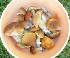 Free Edible Mushrooms. Stock Photo - 16227870