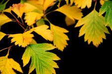 Free Yellow Leaves On Black Stock Photo - 16228140