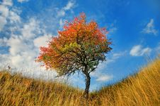 Lone Tree In The Fall Time Royalty Free Stock Photography