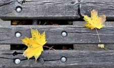 Free Yellow Leaves Stock Photos - 16228623