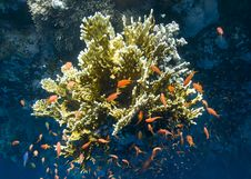 Tropical Coral Reef Buzzing With Small Fish. Stock Photos