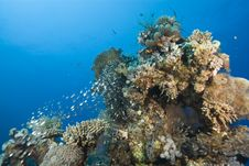 Free Tropical Coral Reef With Small School Of Glassfish Royalty Free Stock Photo - 16229385