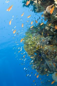 A Colorful And Vibrant Tropical Coral Reef Scene. Stock Photos