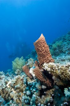 Free Prickly Tube Sponge On A Tropical Reef. Royalty Free Stock Photos - 16229438