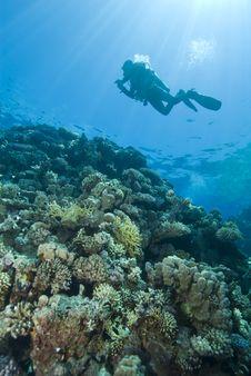 Free Scuba Diver Silhouette. Stock Images - 16229484