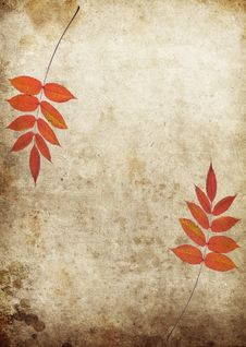 Free Autumn Leaves Royalty Free Stock Photography - 16229857