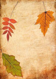 Free Autumn Leaves Stock Photo - 16229880