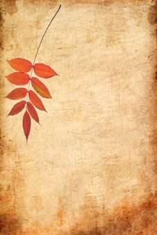 Free Autumn Leaves Royalty Free Stock Photography - 16229897