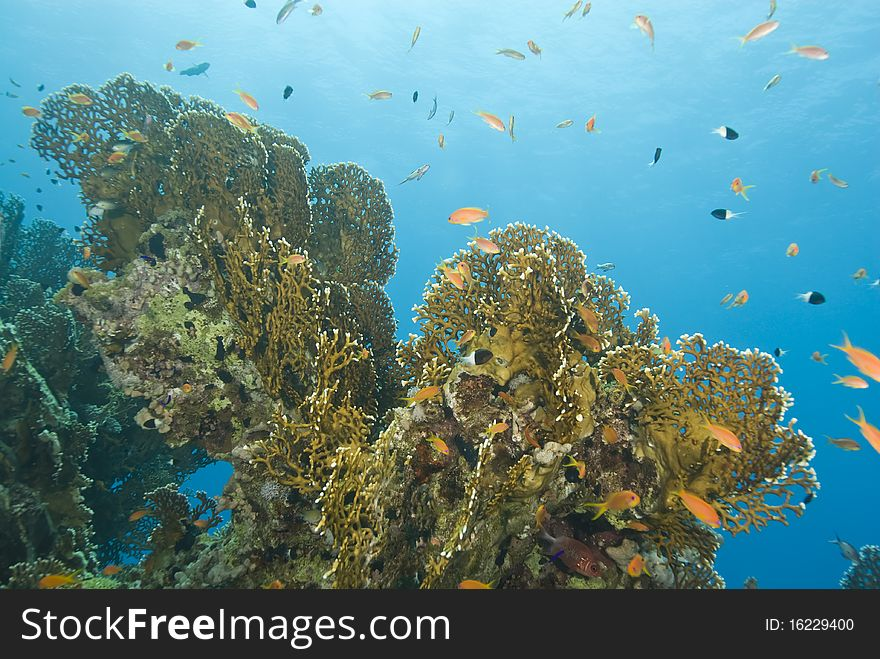 A colorful and vibrant tropical coral reef scene.