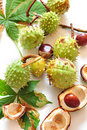 Free Chestnuts Royalty Free Stock Photography - 16232807