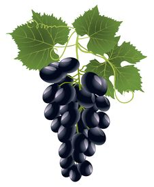 Free Grape Royalty Free Stock Photography - 16230467