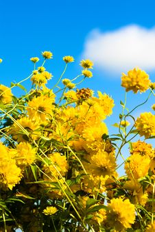 Free Yellow Flowers Stock Photography - 16230722