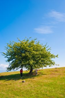 Free Summer Landscape Tree Child And Mother Royalty Free Stock Images - 16230859