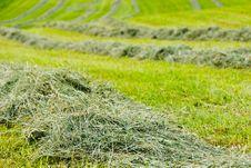 Free Hay Royalty Free Stock Image - 16231066