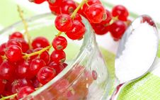 Free Currant Royalty Free Stock Photo - 16231425