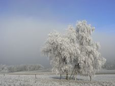 Free Frosted Tree Royalty Free Stock Photo - 16231495